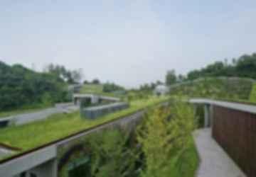 Creating a Rooftop Garden