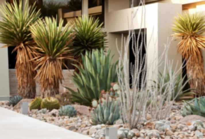 Landscaping Tips for Eco-Friendly Designers