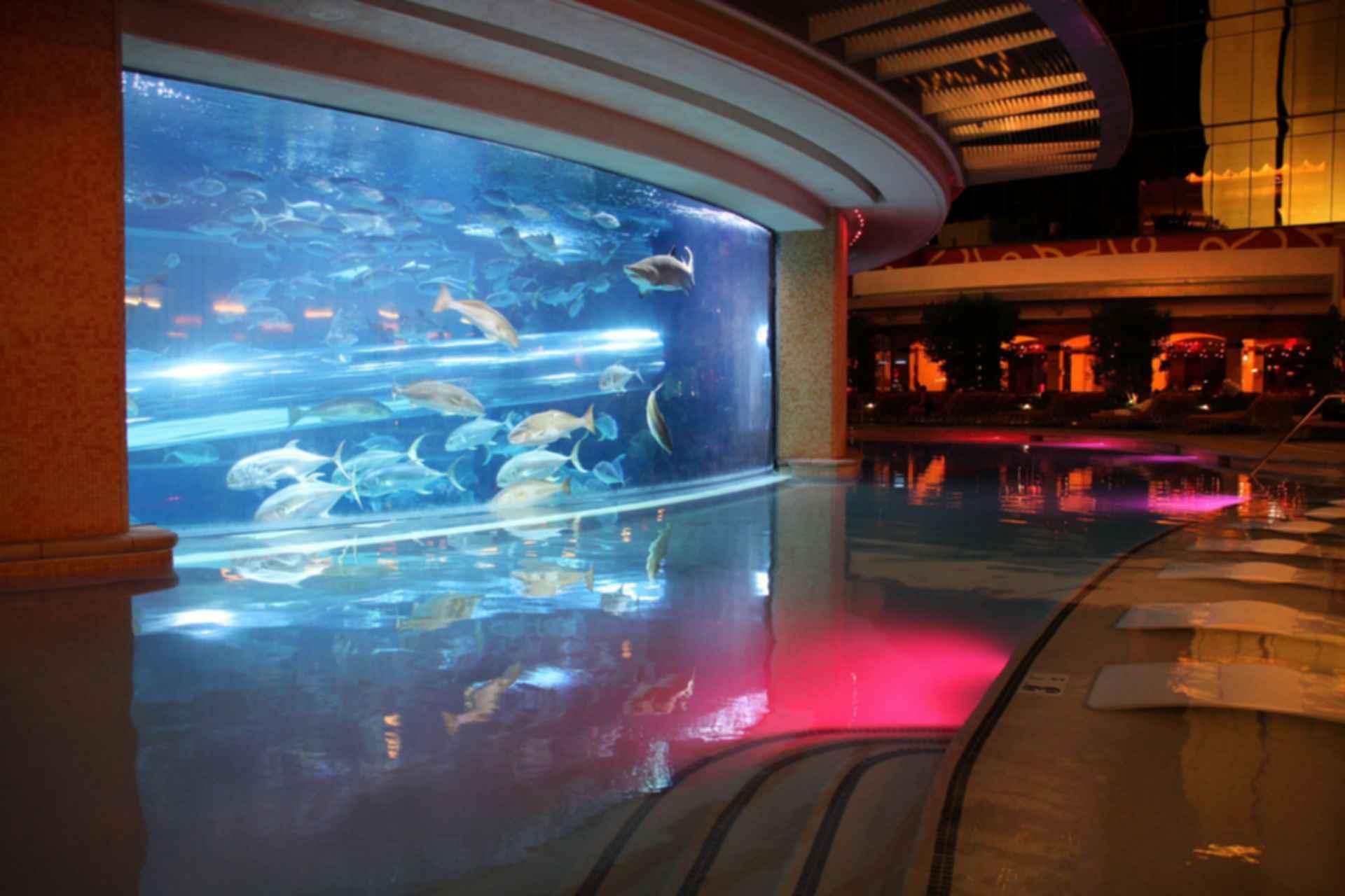 Golden Nugget Hotel - Pool