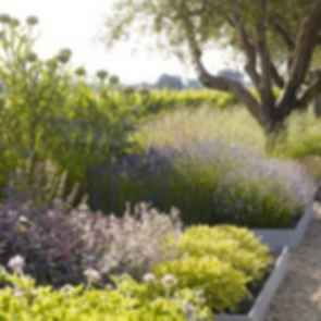Medlock Ames Tasting Room - Plants