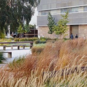 Smith Cardiovascular Research Building Landscape - Plants