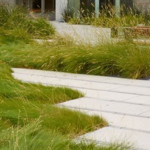 Smith Cardiovascular Research Building Landscape - Walkway/Grass
