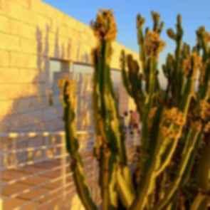 Getty Museum Cactus Garden - Walkway/Cactus