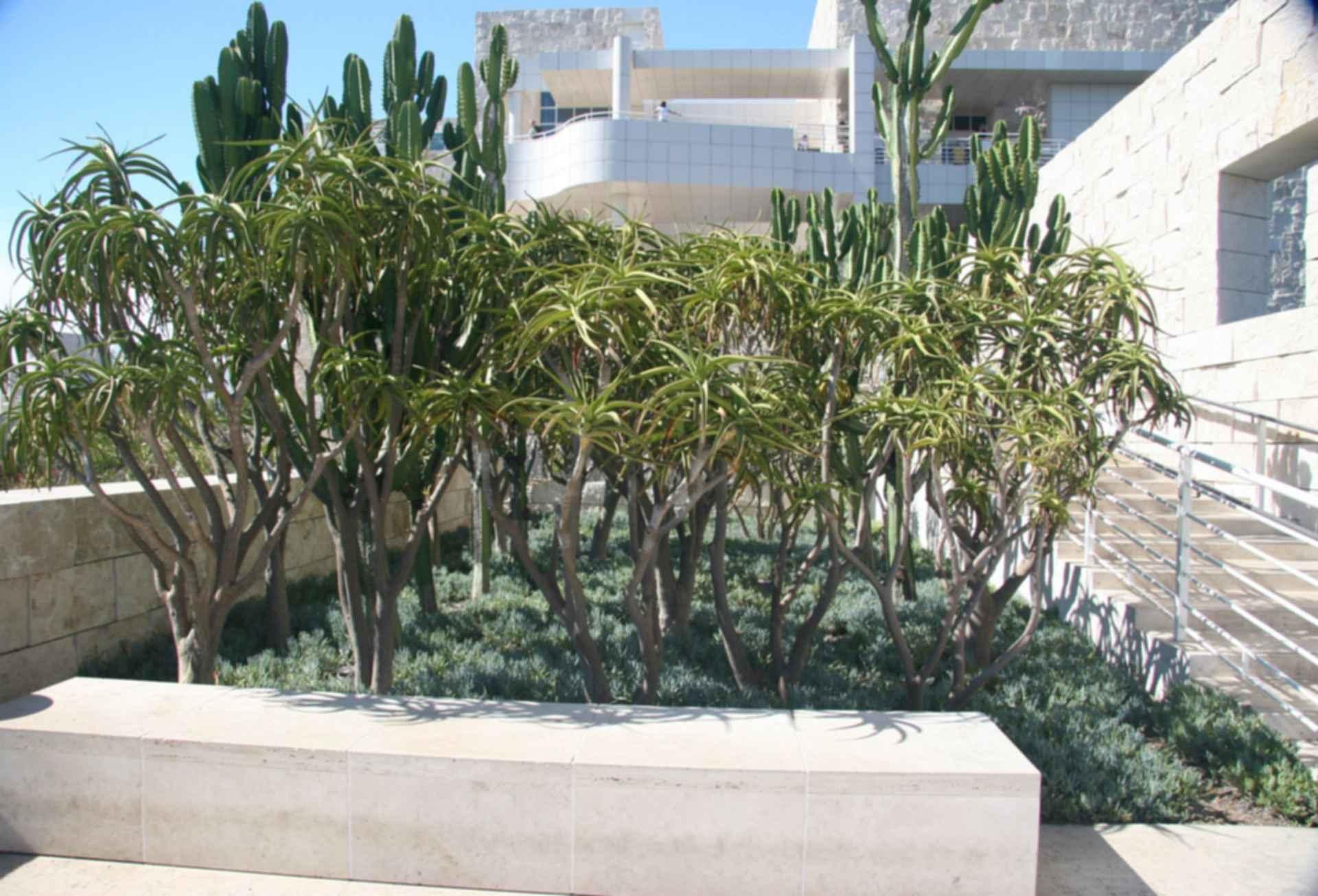 Getty Museum Cactus Garden - Plants