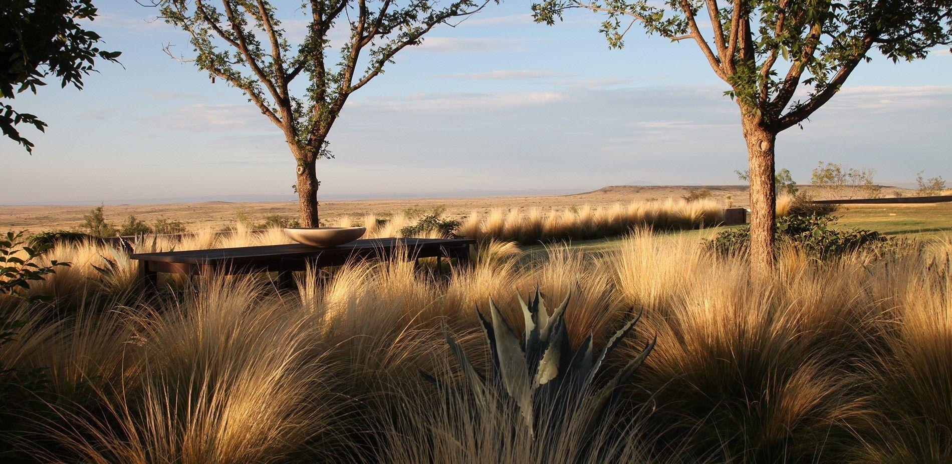 West Texas Ranch Plants Landscape Modlar Com