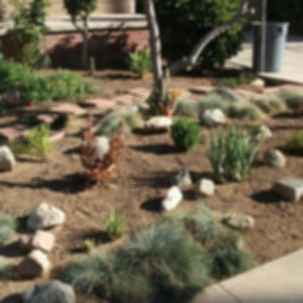 Drought Tolerant Landscaping Ideas