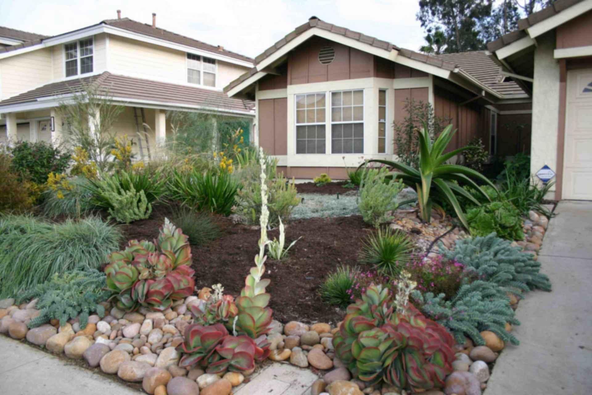 Front Yard - Cactus