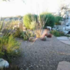 Backyard - Rocky