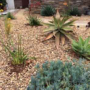 Desert - Dry Areas
