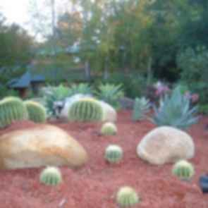Desert - Driveway Plants