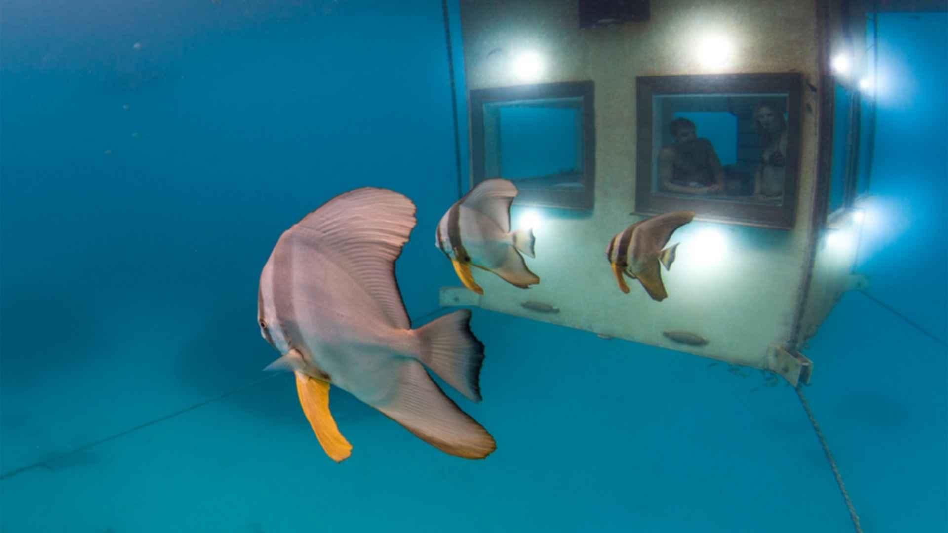The Manta Resort - Underwater Window