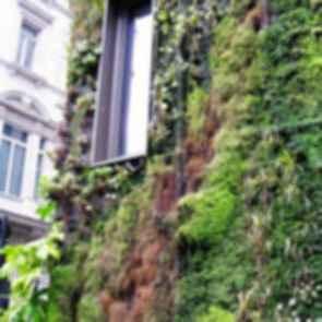 Athenaeum Hotel - Exterior Plant Wall