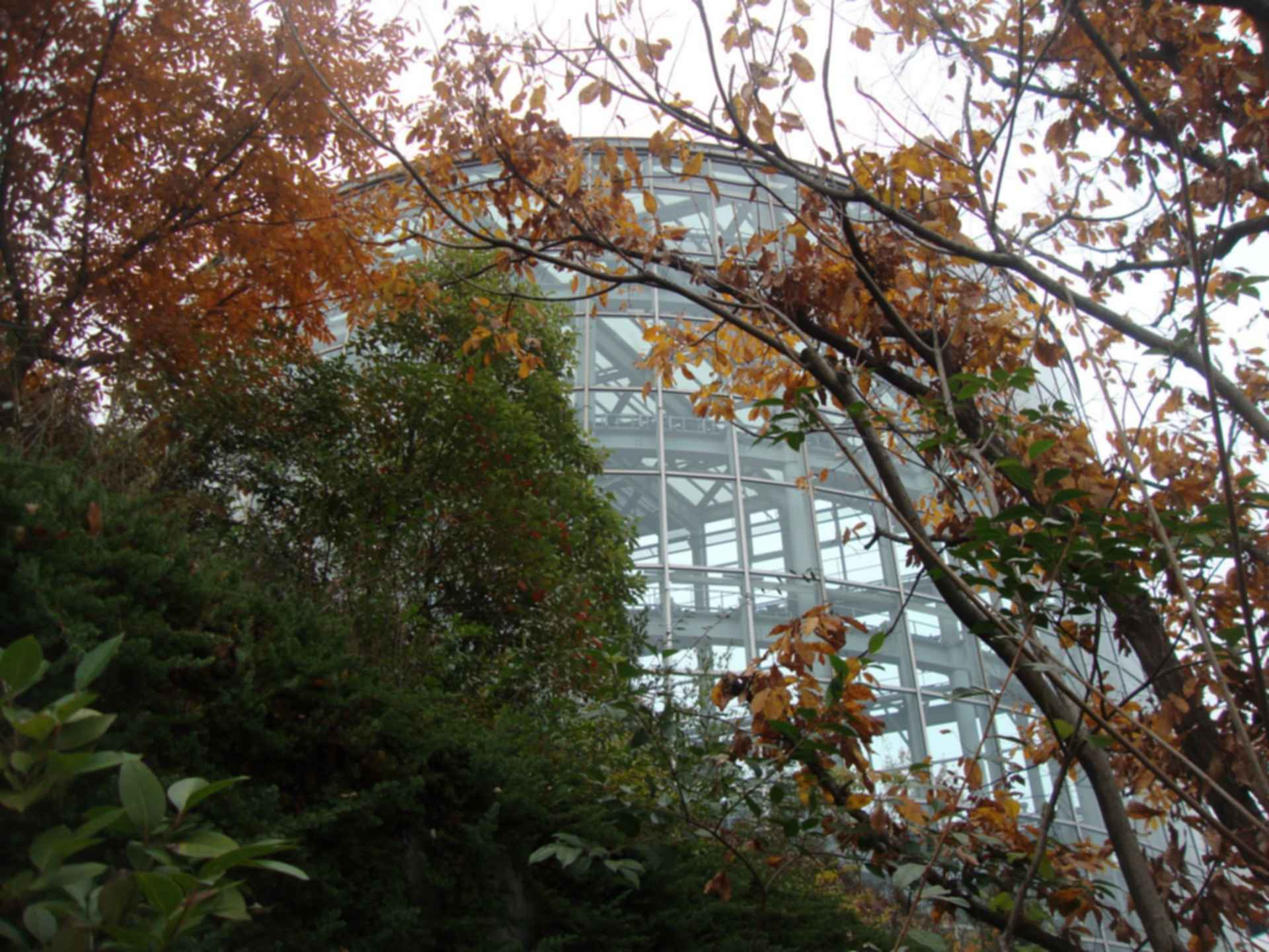 Acros Fukuoka International Hall - Window