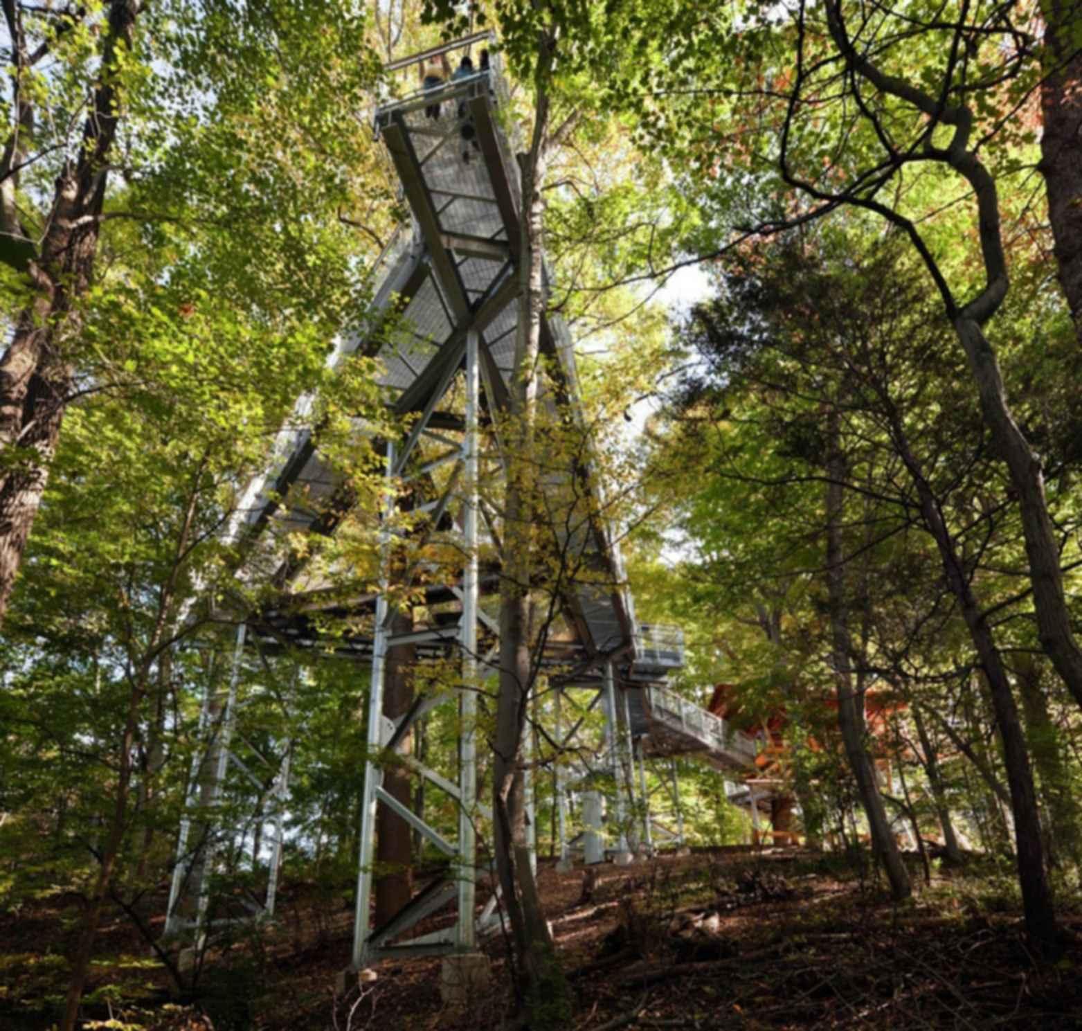 Morris Arboretum Tree Adventure - Landscape