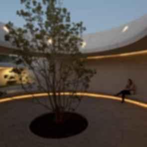 M9 (Memorial 9) - Magnolia Tree
