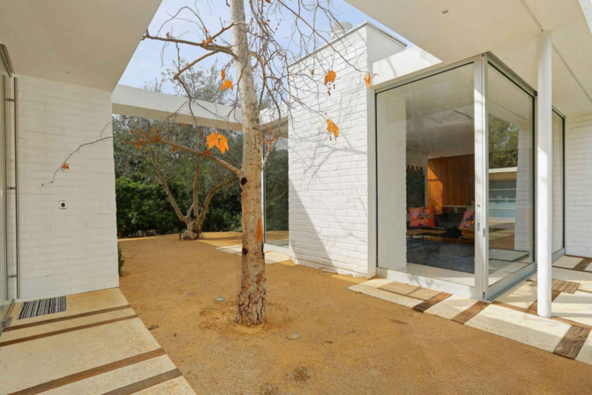 Hollywood Hills Residence - Exterior/Tree