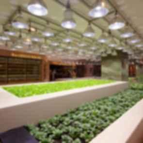 K11 Art Mall - interior