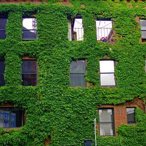 Living wall - exterior