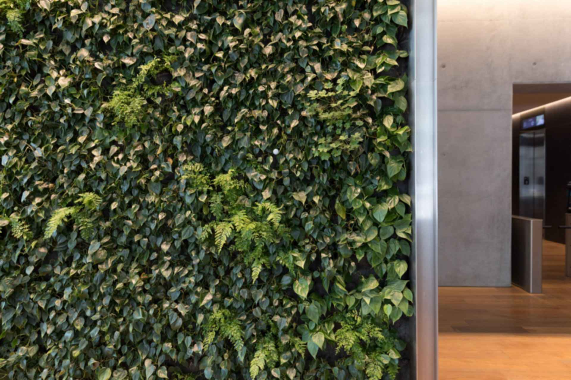 Living Wall Details