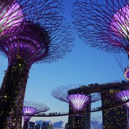 Supertree Grove - in Front of Marina Bay Sands