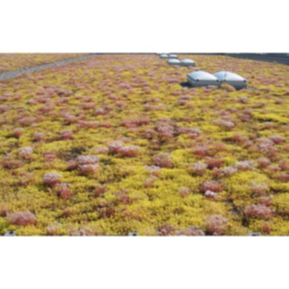 XF 301 Pre-Vegetated Moss-Sedum Mat